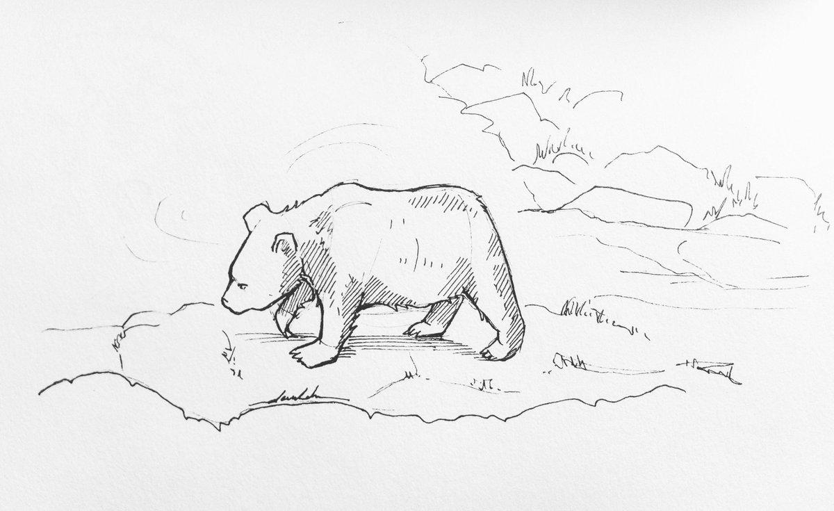 Bear 🐻 #dailyart #dailyillustration #bear #zoo #blackandwhitedrawing #walking #animals https://t.co/IrVoMpVBH0