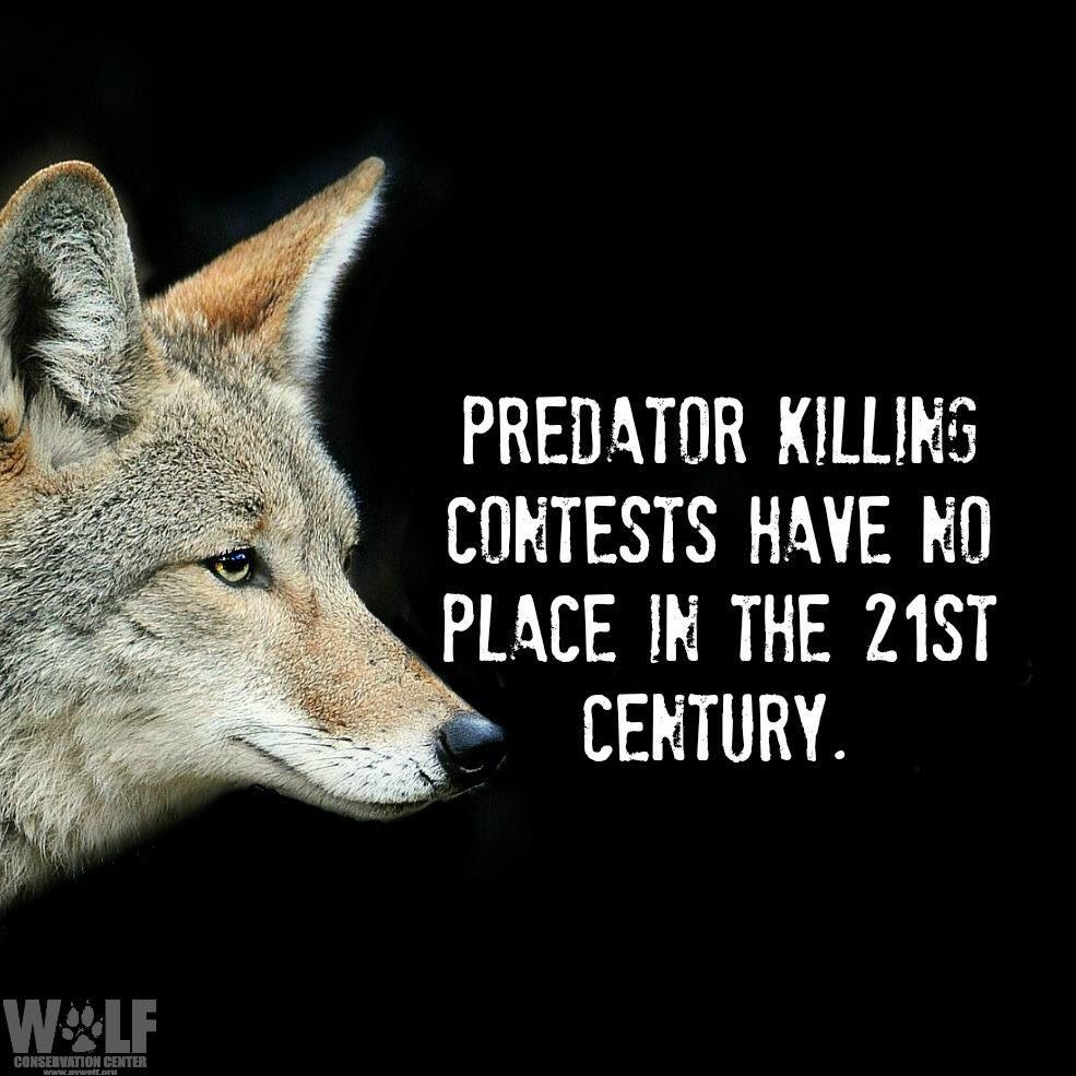 Wolf Conservation Center on Twitter: