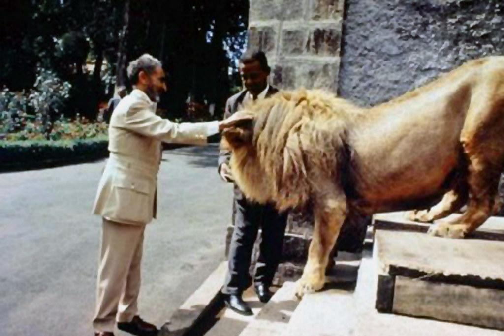 Lions were once tamed and used as domesticated animals in Ethiopia. They were even riden by Ethiopians. Ethiopia's last Emperor, Haile Selassie had several lions he kept as pets.