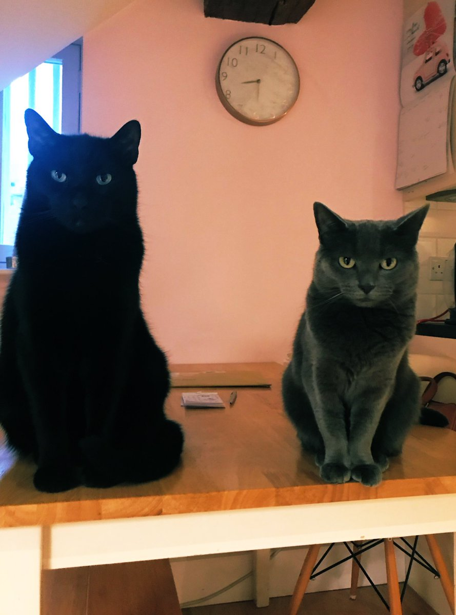 Hiya! 👋🏻 Happy Thursday to you all! #FluffyFursday #LittleAndLarge #greycat #panfur