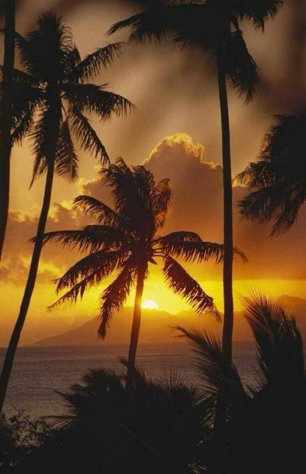 Good night 😴 Sweet dreams 💫✨💫 Sleep well tweet hearts 💗😘😘
