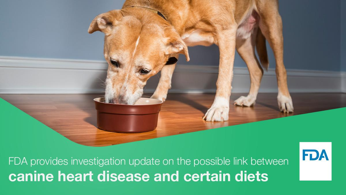 After FDA warning about grain-free pet food, what's safe to feed our pets?