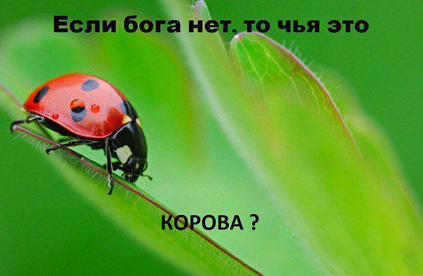Image from https://www.twipu.com/RussianMemesLtd/tweet/1144608137334407477