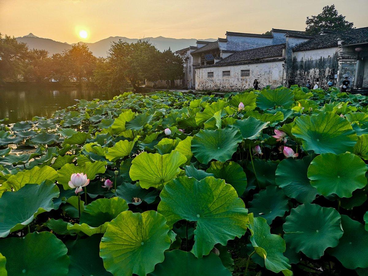 xinhua china anhui laian pond cypress scenery scenery - 899×674