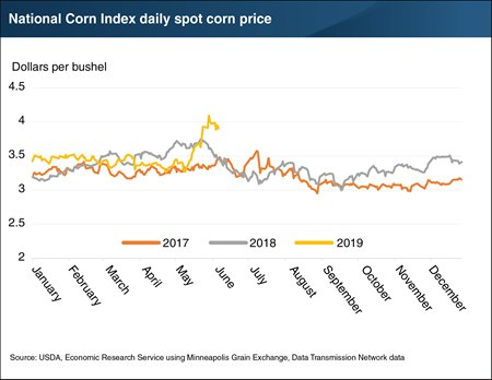 National Corn Index daily spot corn price.