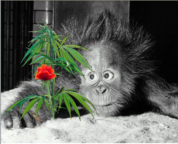 Цветочек аленький смешные картинки, афоризмы короткие