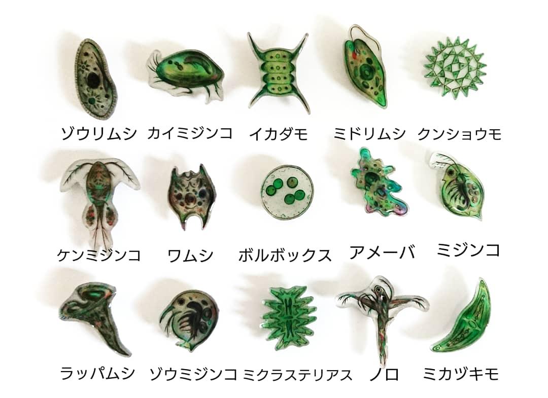 プランクトン 種類
