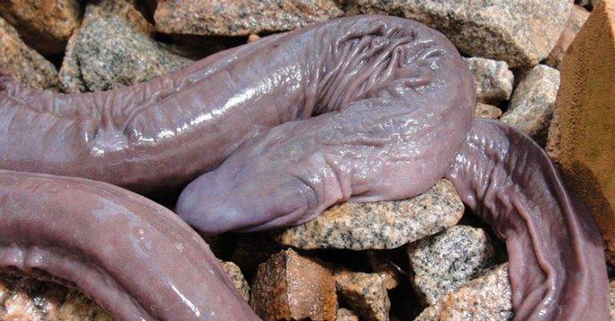 ai un penis mic