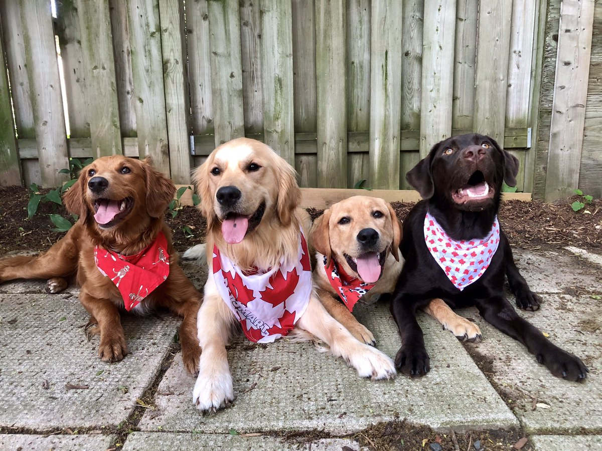 Happy #CanadaDay weekend from Honey, Luke, Tripp and Skye! 🇨🇦 #CanadaDayLongWeekend #CanadaDay2019