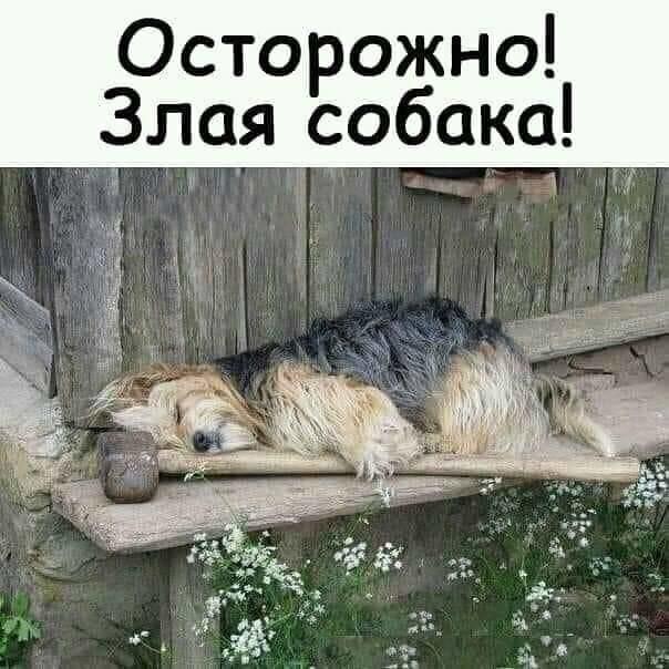 Злая собака фото прикол, выходные открытки прикольные