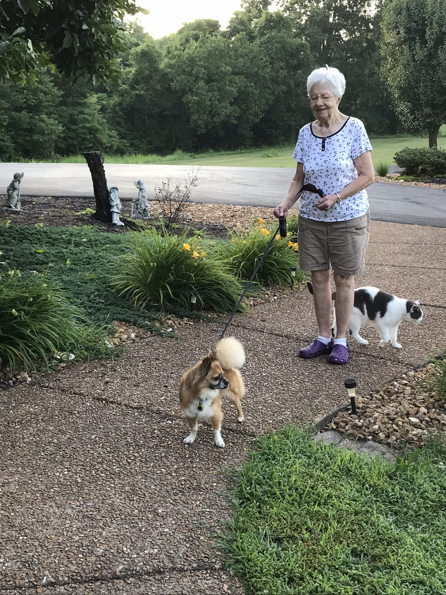 ❤️Hot to Trot.Midwest report for Sunday, Funday:Gran leads a 6  AM march before the heat arrives in full.  Mid 90s today, calm winds, humidity 80% this morning. Afternoon will be spent on the windowseat, with the AC on! @JoyOfCats @PincyCat @LordGraydon @sandyincanada @Aishatonu