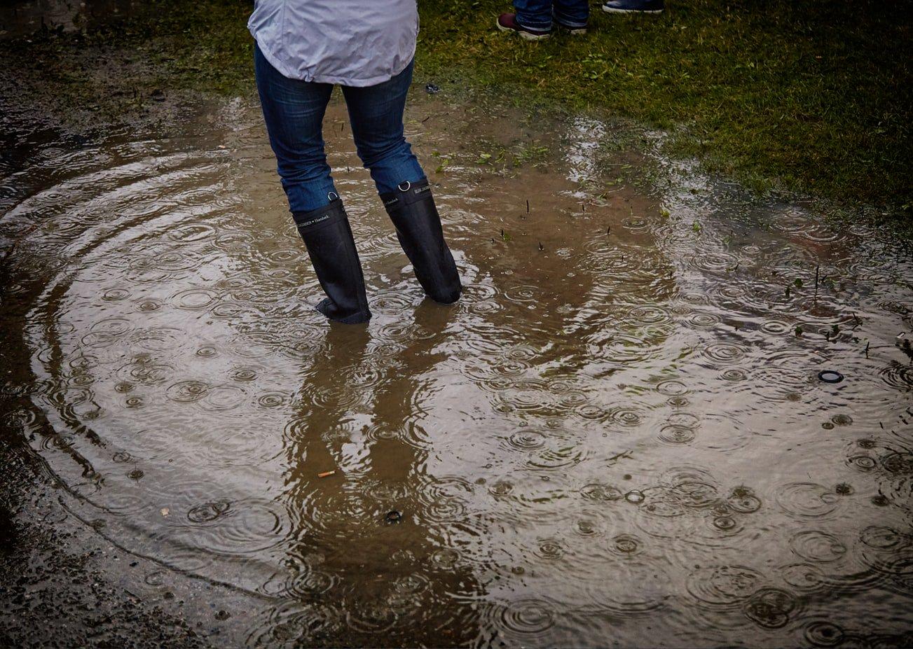 Затоп от дождя в лесу картинки