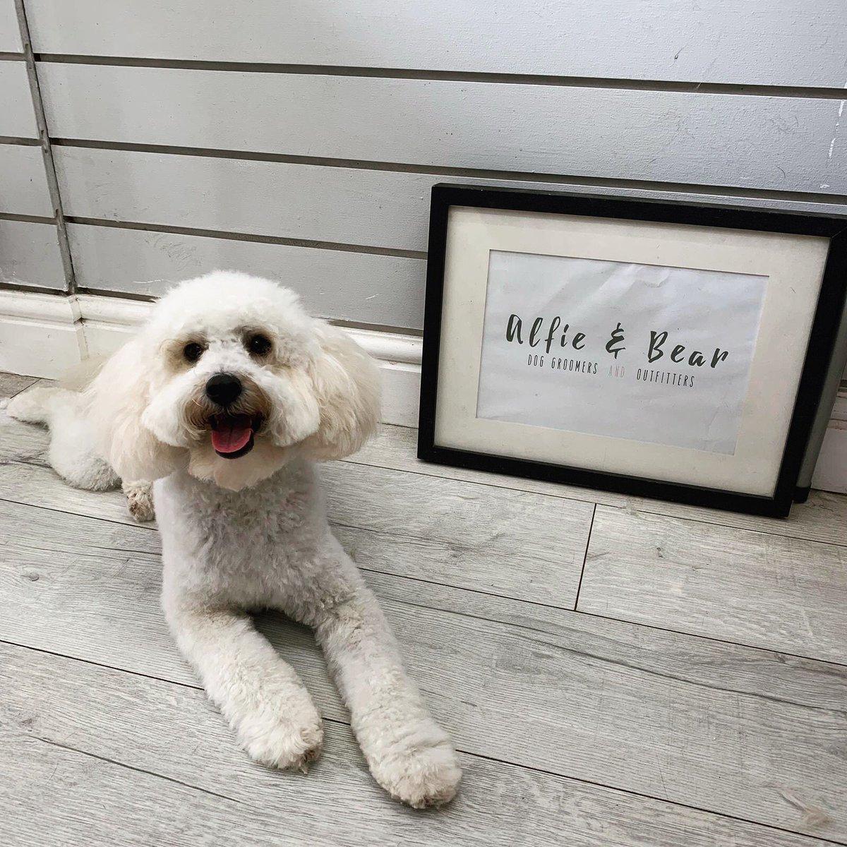 Full Groom | Daisy - Cavapoo  Such A Happy Girl    #DogGroomer #DogGrooming #Cavapoo #Dogs #DogSpa #DogGroomingSalon #DogOfTheDay #DogsOfTwitter #DogLovers #NEFollowers #NewcastleUponTyne<br>http://pic.twitter.com/rYpCbSmMQm