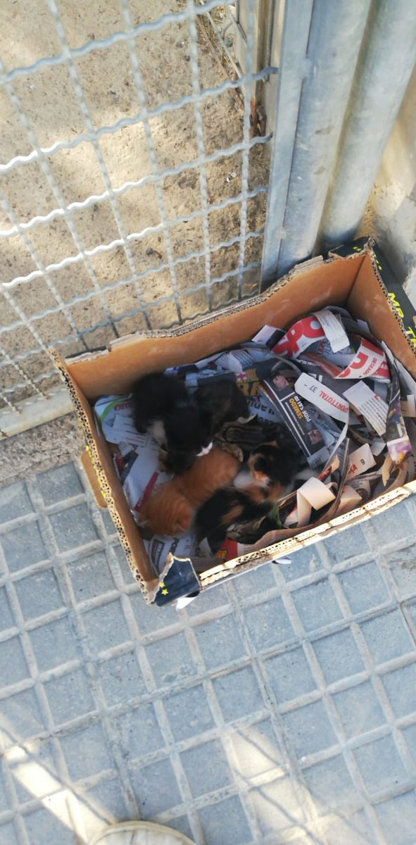 💔ENS HAN ABANDONAT 6 CADELLS DE GAT A LA PROTECTORA  Avui al arribar al CAADM, ens hem trobat amb aquesta caixa amb 6 gats dins de dies.  Necessitem cases d'acollida perquè encara van amb biberó, i aquí a la protectora és inviable tenir-los.  ⠀⠀ 🆘NECESSITEM AJUDA I DIFUSIÓ