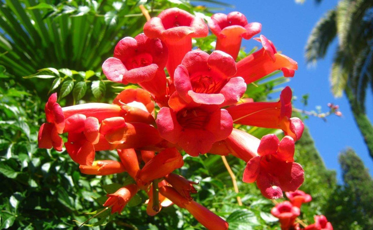 Цветы абхазии фото с названием многие