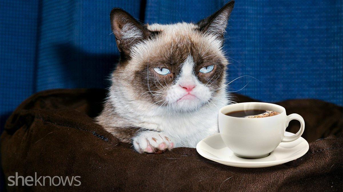 Приколы фото с добрым утром с кошками
