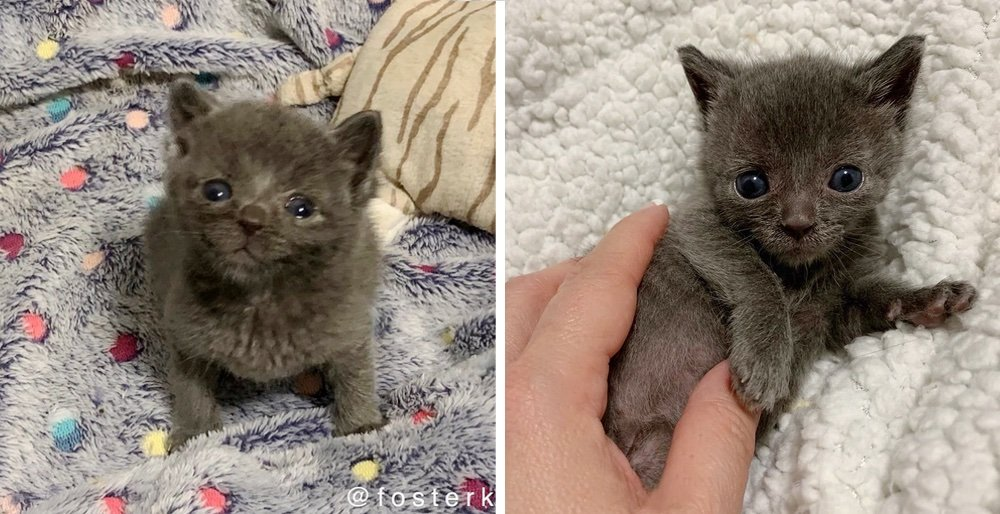 Kittens found hiding in the grass, one of them is much smaller than his siblings. See full story and updates: lovemeow.com/kittens-found-…