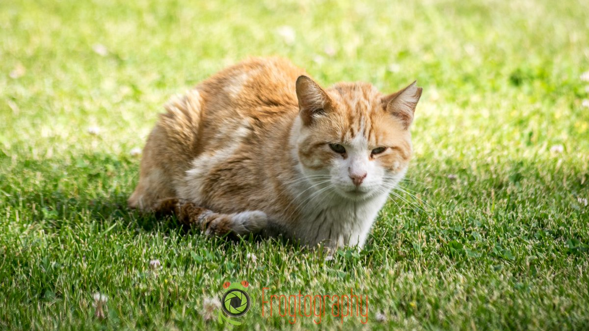 #StrayCat #Cat #urbanwildlife