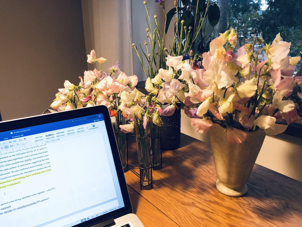 Writing an article is definitely better when surrounded by sweet smelling, beautiful, homegrown sweet peas! #phdlife #PhDstudent #virology https://t.co/46Oa37d6Da