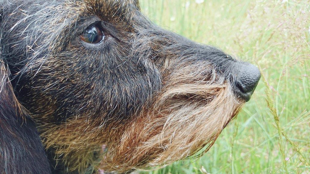 Z okazji Dnia Psa. Lola, czyli, jak to określił Jonaszek, mała psinka z dużą dozą melancholii