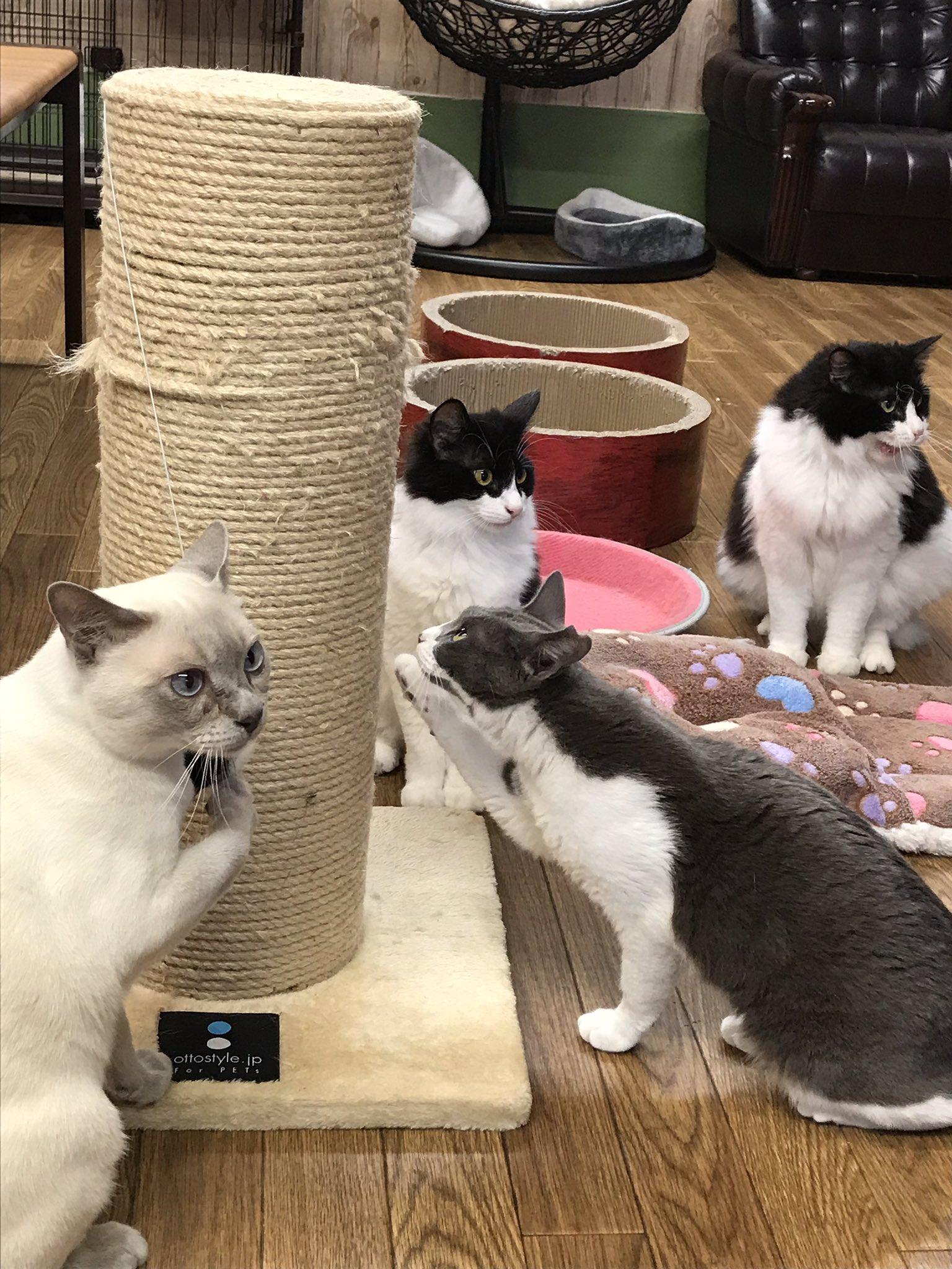 保護猫カフェGOMAが7月末をもって閉店となります。今居る12匹の猫達の里親さんを探す為、情報発信をしていきます。一匹でも多くの子にずっとのお家が見つかるように、皆さまどうぞ宜しくお願い致します。