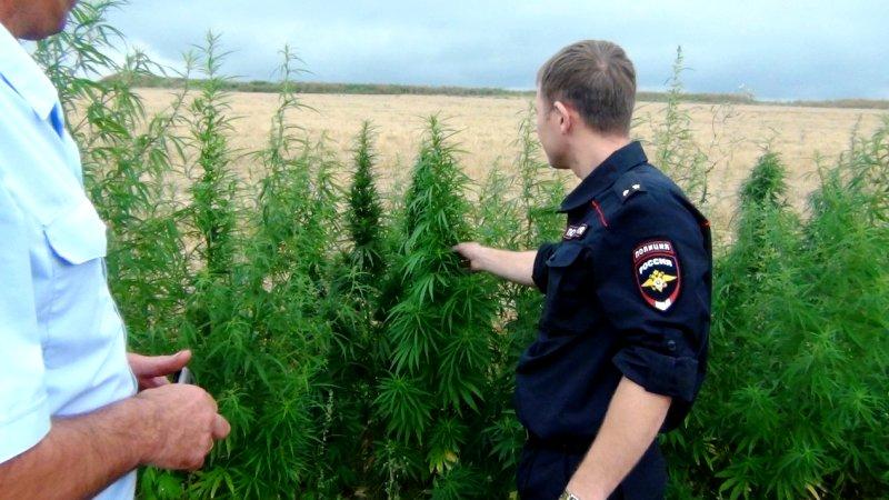 Конопля в пензенской как влияет марихуана на