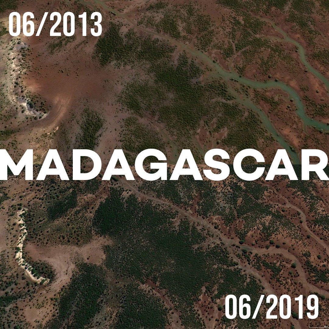 Ecosia's trees in satellite images