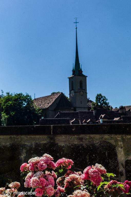 Nydegg Church with Roses #nydegg #church #roses #summertime #berne #bern #bernpictures #bern_pictures #igersbern #_bernstagram_  #iloveswitzerland #ilovebern #leicaswitzerland #leicam #leicacamera #leicainternational