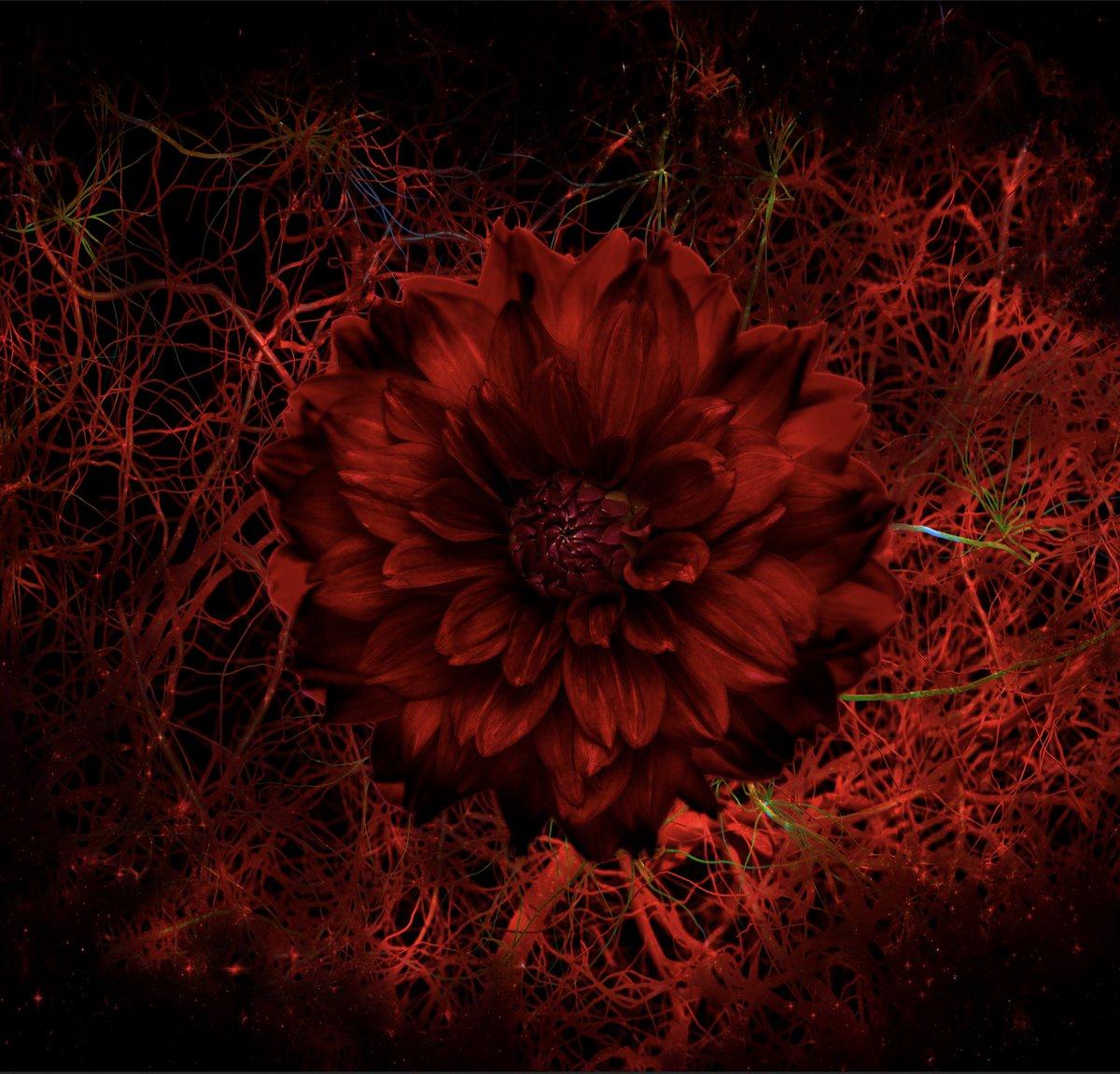 【先行配信】7/3(火)0:00よりMIGMA SHELTER Newシングル『Names』先行配信❗️宇宙最速で未公開音源「Spider Line」「69」も公開🌎・iTunes・Apple Music