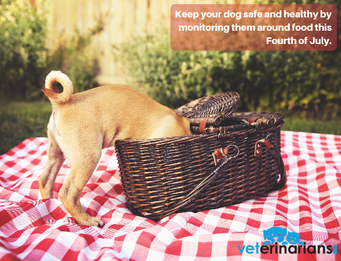 4th of July barbecues and outdoor celebrations are right around the corner! Keep your dog safe and healthy by monitoring them around food. Some foods – onions, avocado, raisins, grapes – can be toxic. Visit bit.ly/2WAwBCF to learn more. #pethealth #petsafety