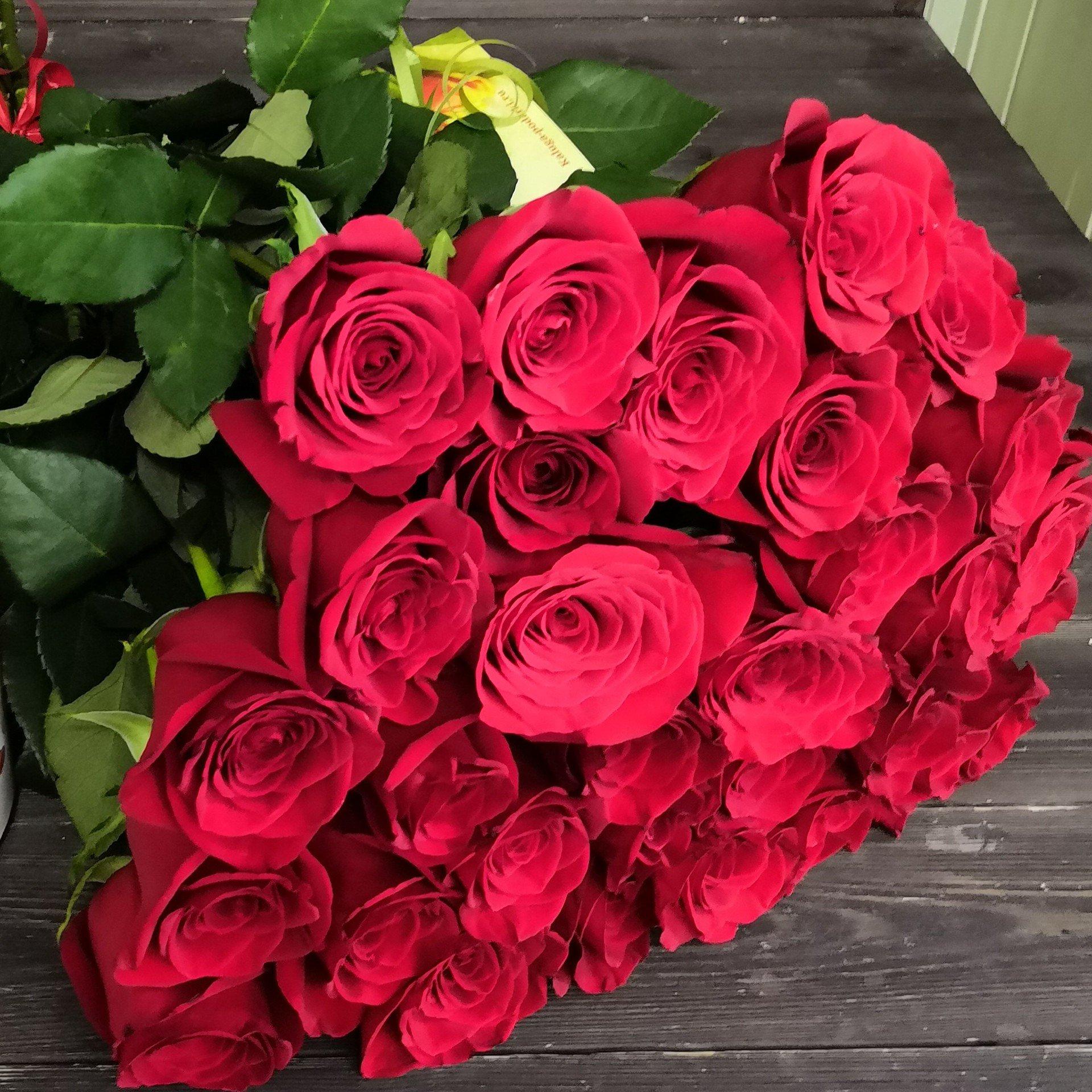 Фото сирийской сиреневые розы цветущей крутой