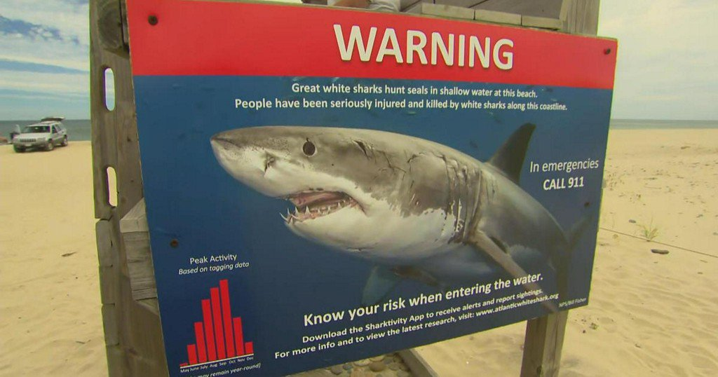It's been a summer of 'Sharknado' for residents in Cape Cod