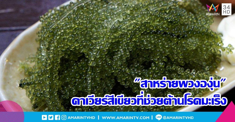 """""""สาหร่ายพวงองุ่น"""" คาเวียร์สีเขียวมากคุณค่า และยังช่วยต้านโรคมะเร็ง - https://www.amarintv.com/lifestyle-update/articles-1383/401598/…  #AmarinTV34 #อมรินทร์ทีวีเอชดีช่อง34 #สาหร่ายพวงองุ่น"""