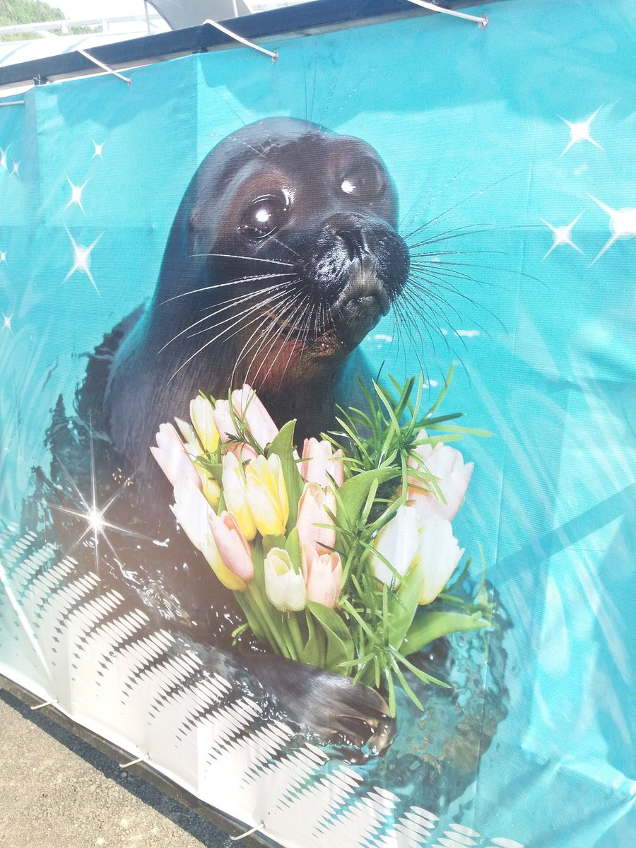 мир поздравление от тюленя дендропарк этого термина