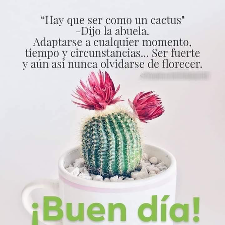 Valor Esg Sur Twitter Hay Que Ser Como Un Cactus Adaptarse A Cualesquier Momento Tiempo Y Circunstancia Ser Fuerte Y Aún Así Nunca Olvidarse De Florecer Hermoso Miércoles Buenosdias Frasedeldía