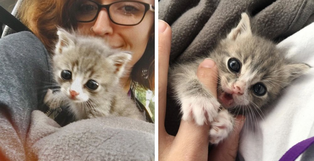 Kitten found alone on a porch is so happy to be rescued after meowing for days. See full story and updates: lovemeow.com/kitten-stray-r…
