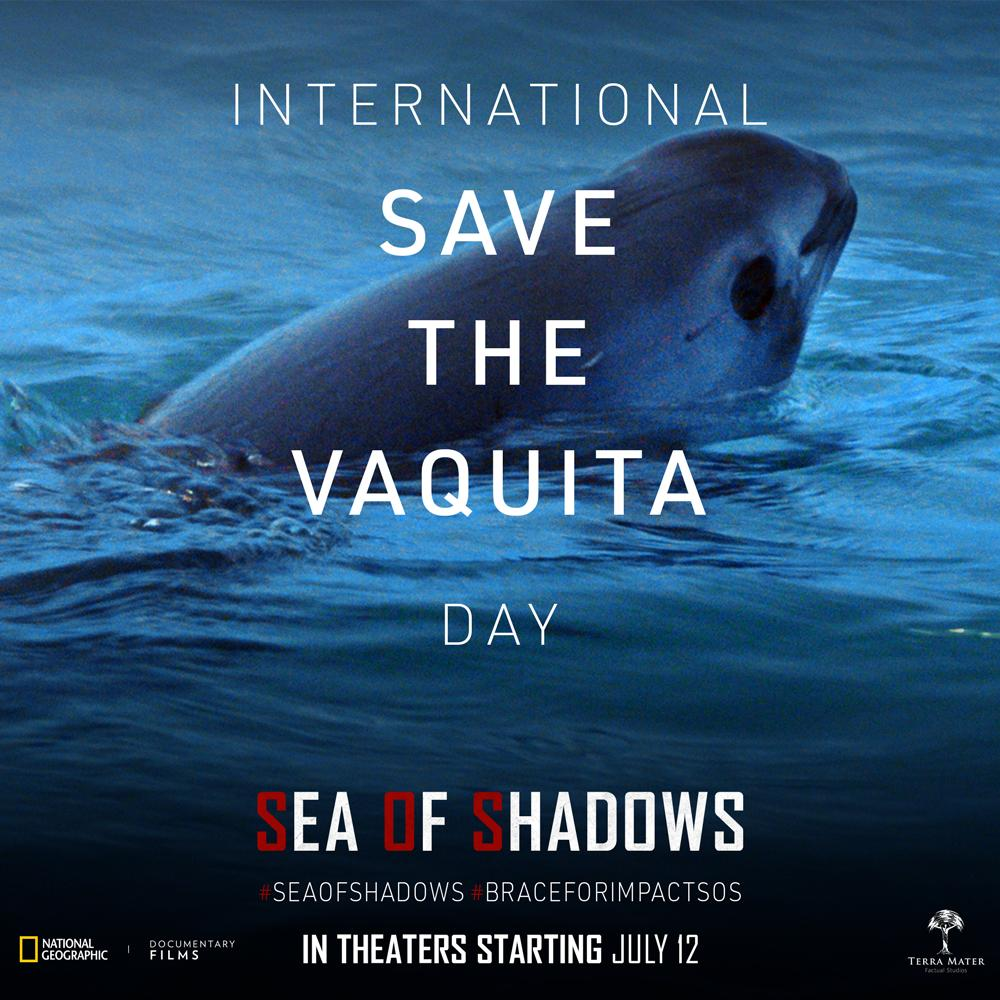 Today on International Save the Vaquita Day we must show the world what's happening in the Sea of Cortez, and remind them that #ExtinctionisAvoidable. Learn how you can get involved at  http://www. vivavaquita.org /     and join us as #seaofshadows opens across the U.S. next week! <br>http://pic.twitter.com/QlXsgzj7Sc