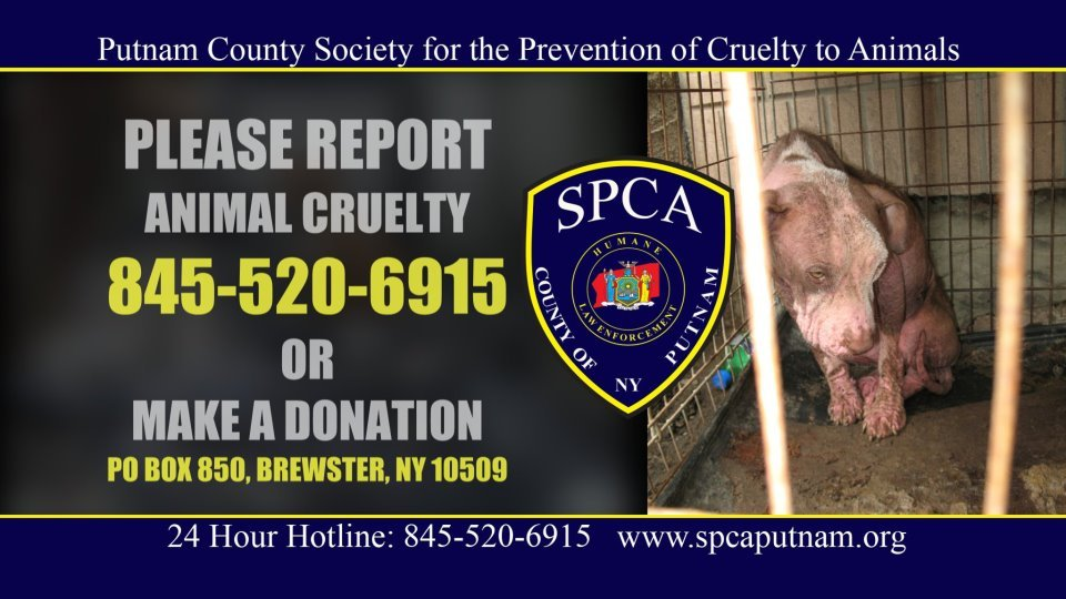 REPORT ANIMAL CRUELTY #animalcruelty #newyork #pennsylvania