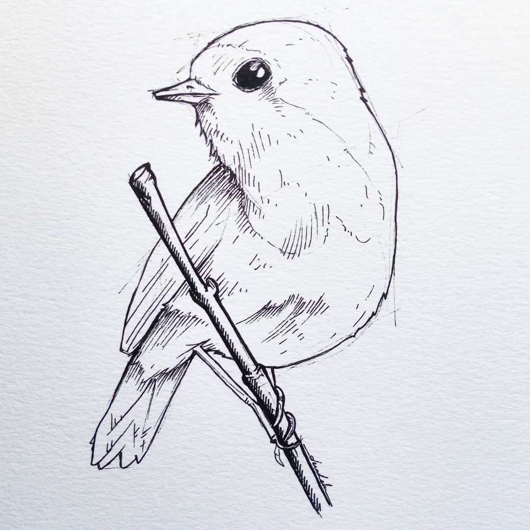 Robin #dailyart #dailyillustration #bird #birdstudy #robin #animal #animals #monochrome https://t.co/EKQKWwDeXj