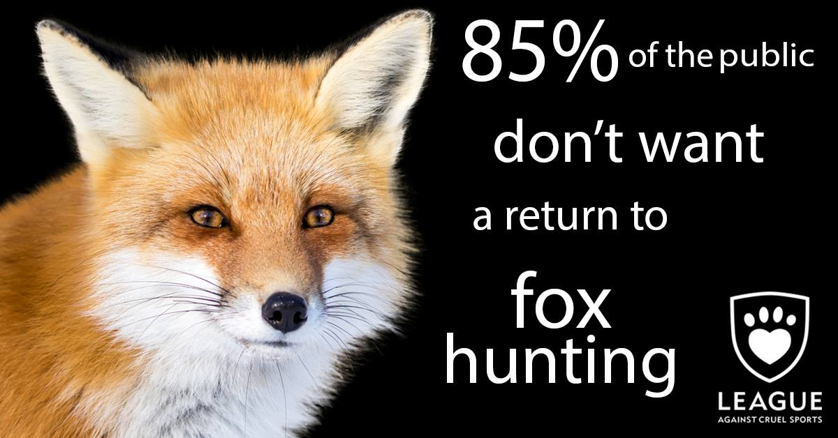 Are you one of the 85% against #Foxhunting? ReTweet and show @Jeremy_Hunt that you want to #KeepttheBan https://t.co/Zz7iZQnJT8