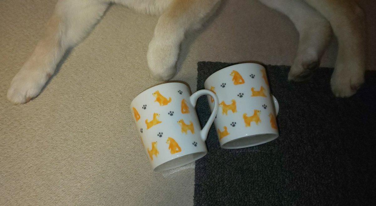test ツイッターメディア - @ymfu_ma そんな可愛いお皿もあったのね~😆 数日前にこのマグカップ見つけて買ったけど同じシリーズかな?また行かなきゃ! #ダイソー #柴犬 https://t.co/mQL6iys7NY
