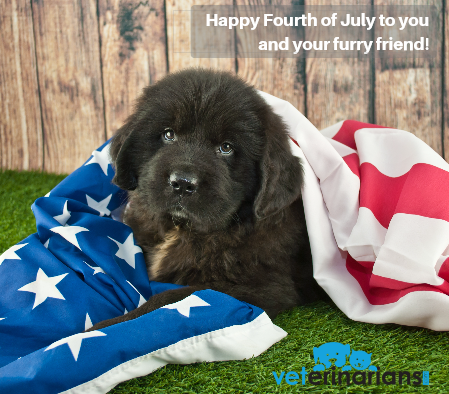 Happy 4th of July from all of us at Veterinarians.com! Hoping you and your pet enjoy a safe and happy holiday!