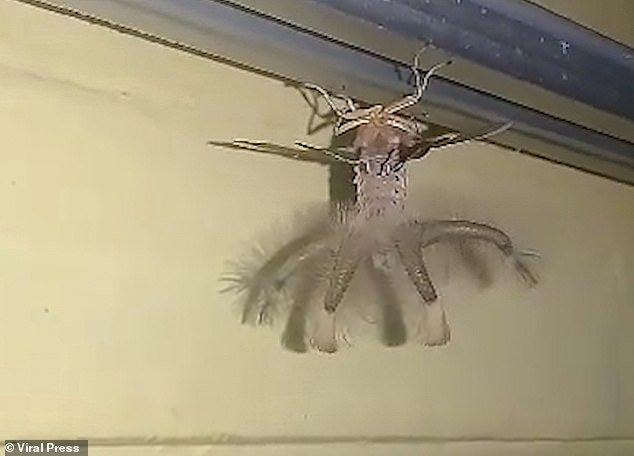 【閲覧注意】インドネシア・バリで見つかった「謎の生物」・・・