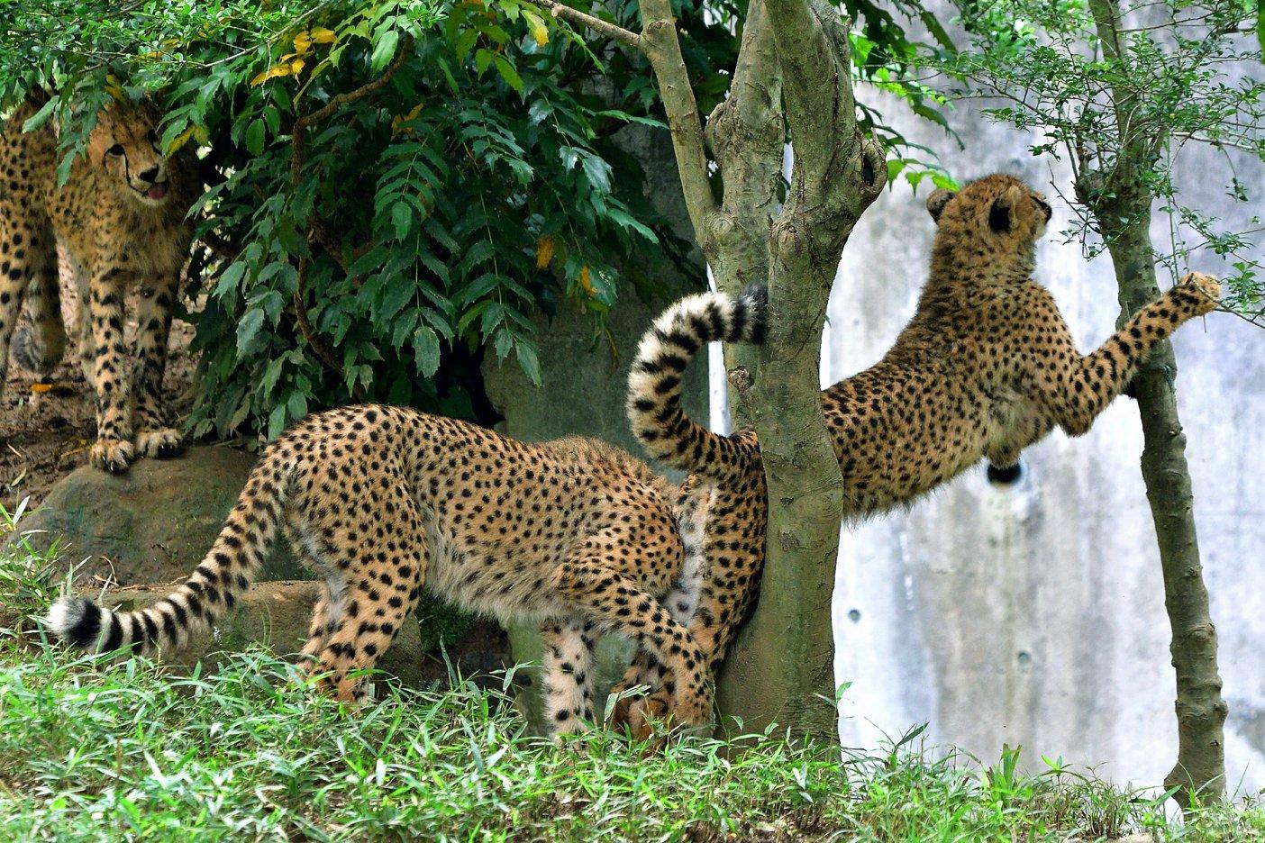 木の又に挟まれたが もがいて脱出に成功です。 #多摩動物公園