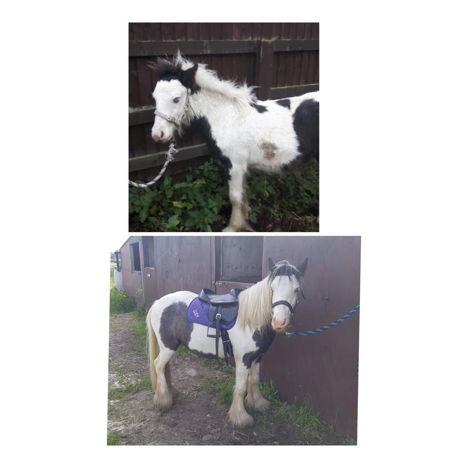 rescuefoal hashtag on Twitter