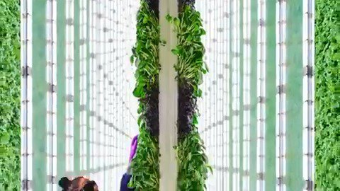 Silicon Valley vertical farm Plenty unveiled its newest farm which can produce enough leafy greens to supply over 100 stores. https://reut.rs/2JehC95