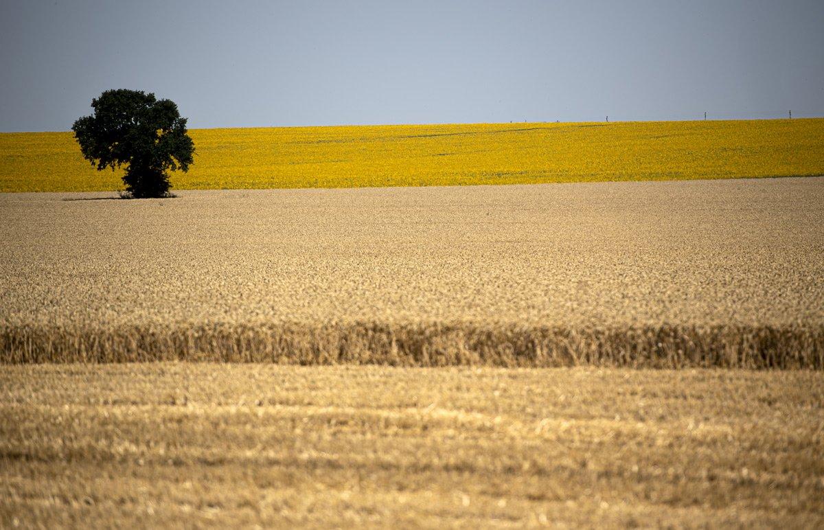 земельная реформа это