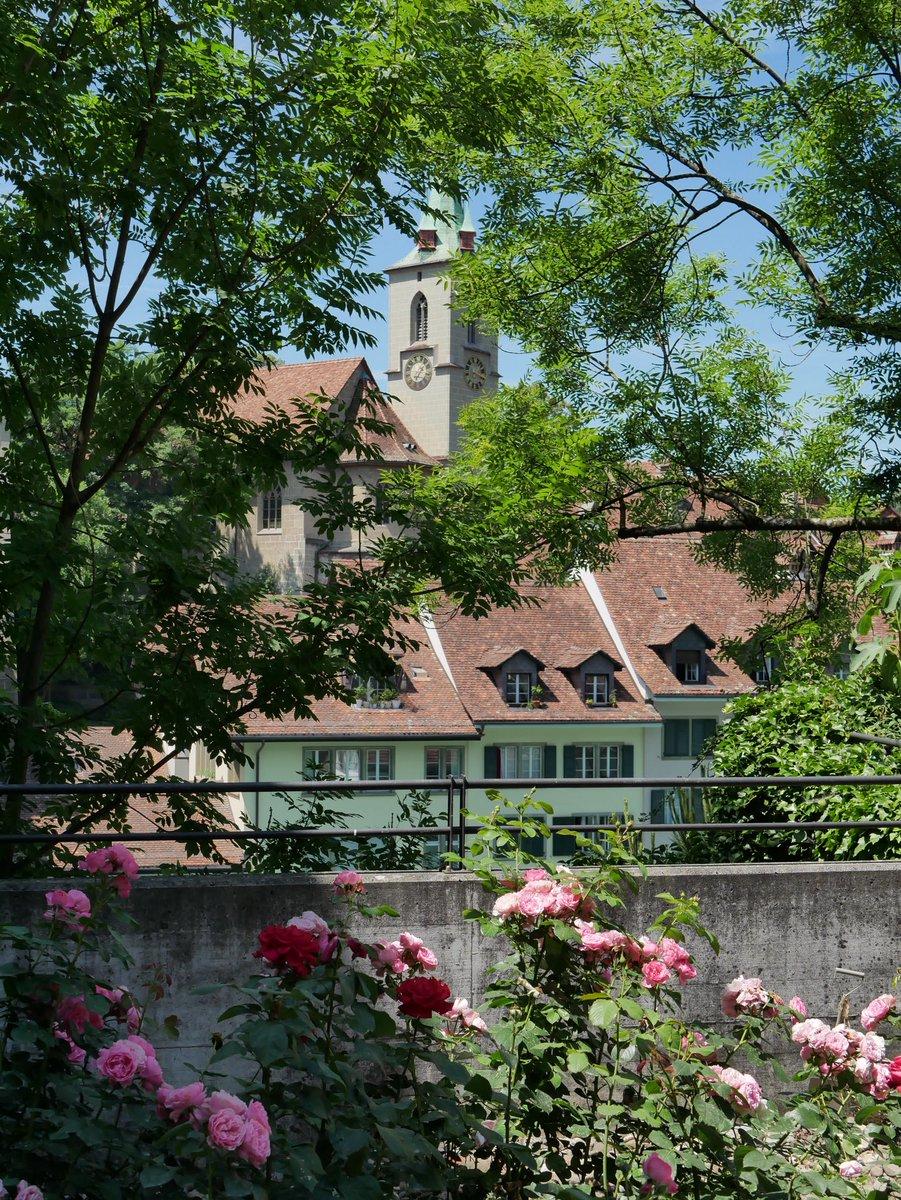 Non-loin, le jardin des roses lui aussi gratuit. On y trouve quelques 220 variétés de roses ! 🌹 #ilovebern