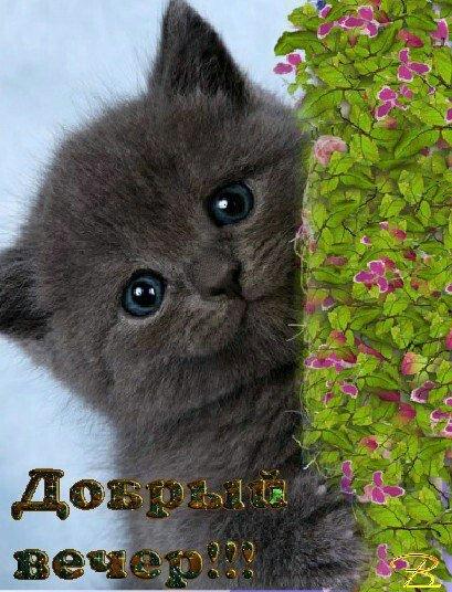 Открытки котенок доброго вечера любимая, картинках днем