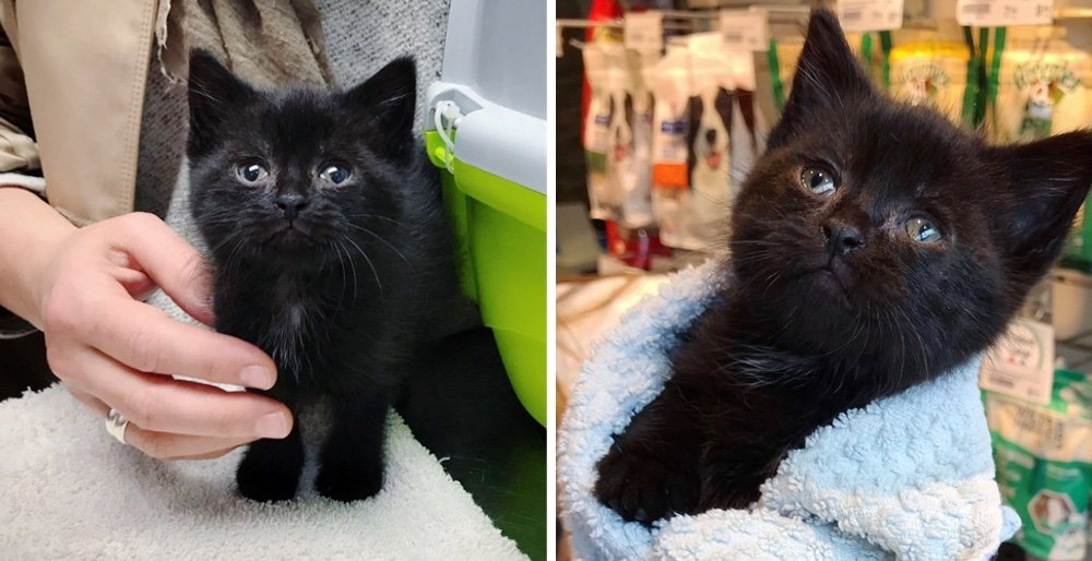 Kitten who was left behind in a garden, is so happy to find help - he cant stop purring. See full story and updates: lovemeow.com/kitten-garden-…